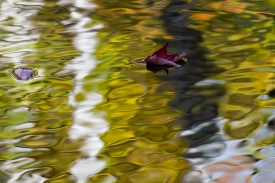 Water Colors - 3H_369513