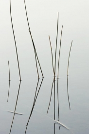 Reed Section - 2V_64007