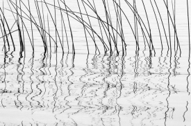 Reed Song - BW_02508